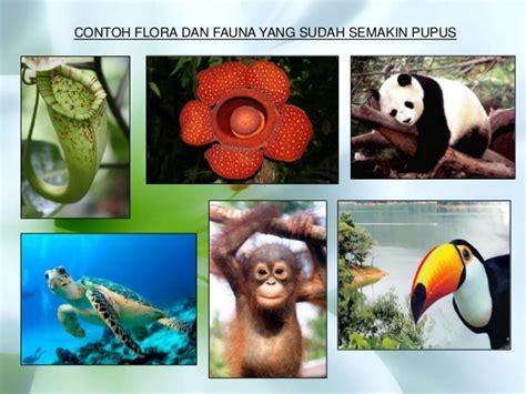 Film Dokumenter Flora Dan Fauna   flora dan fauna