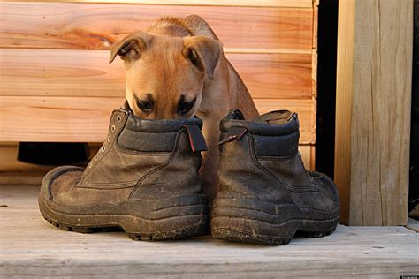 stinky boots 3 easy ways to deodorize your stinky shoes huffpost