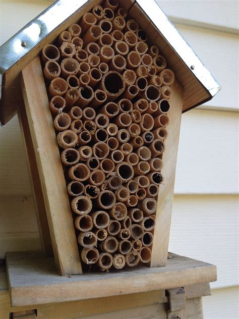 bee houses mason bee house plans numberedtype