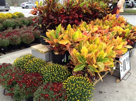 Home Depot Garden Decor by A Sweet Fall Decorating At Home Depot S Garden