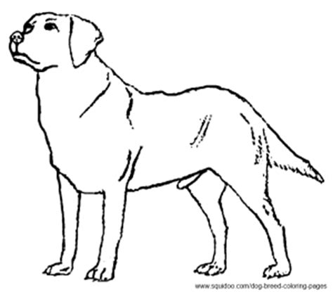 free coloring pages of labrador dogs breed coloring pages hubpages