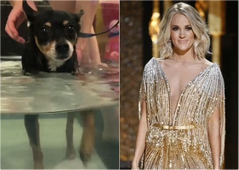 carrie underwood dogs carrie underwood s beloved in recovery after suffering paralysis sounds like