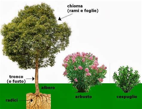 Nomi Di Arbusti E Cespugli by Imparare Con La Geografia 6 Elementi Paesaggio La
