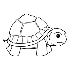 land turtle coloring page cute turtle free coloring pages on art coloring pages