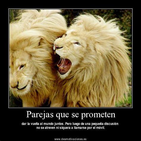 imagenes de leones con frases imagui 15 im 225 genes de leones enamorados im 225 genes de enamorados