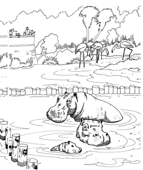 hippopotamus 27 animals printable coloring pages free hippo coloring pages