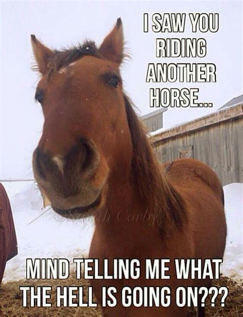 Horse Riding Meme - my horse looks heartbroken if i even look at another horse