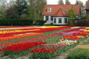 home flower flower house