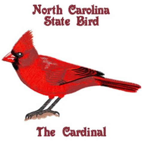 state bird of north carolina the state bird of north carolina drawing and coloring