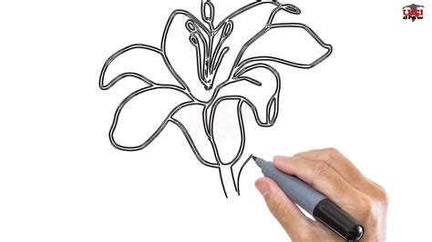 how to draw hands by lily draws on deviantart how to draw a lily 3 ways to draw a lily wikihow