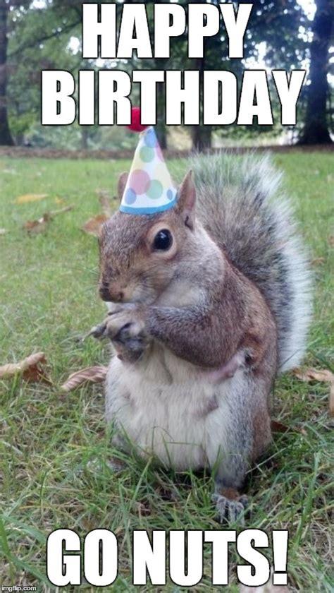 Squirrel Nuts Meme - super birthday squirrel memes imgflip
