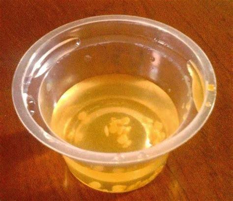 Benih Cabai Rimbun 3 untuk semua pengecambahan benih cabe merah