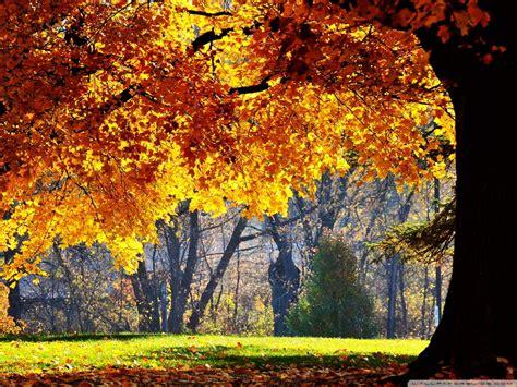 beautiful fall  hd desktop wallpaper   ultra hd tv