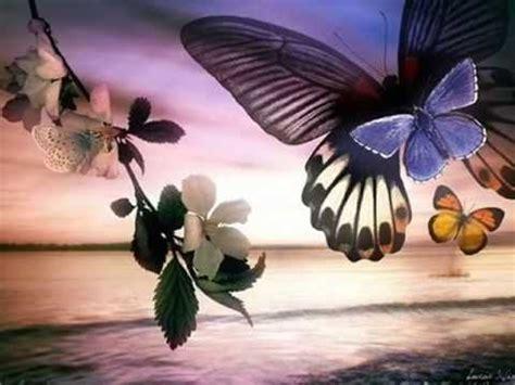 imagenes de mariposas hermosas hermosas mariposas youtube