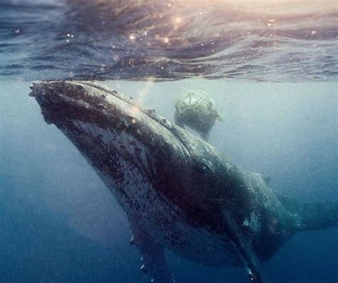 best places in the world to scuba dive scuba list scuba diving website for