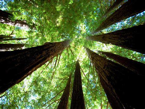 amazing tree 4 amazing tree facts greener ideal