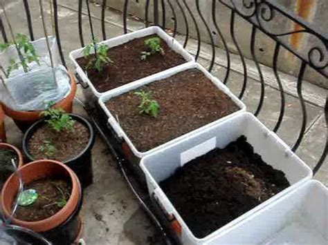 growing vegetables   balcony part  youtube
