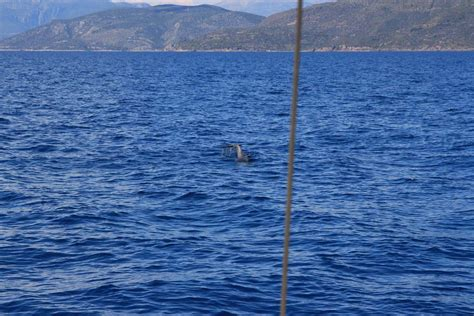 sailing greece with skipper sailing in greece a skippers log from saronic gulf