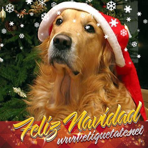 imagenes feliz navidad con perros colecci 243 n de im 225 genes navide 241 as de perritos para compartir