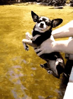 pomeranian air swimming 13 air swimming dogs will make your day