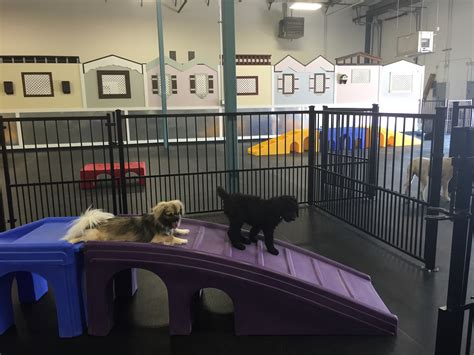 puppy daycare sf activities and doodle daycare