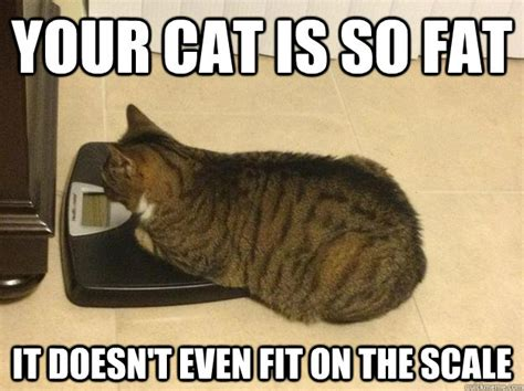 Fat Cat Meme - fat cat memes images