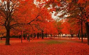 autumn leaves falling clip art wallpaper