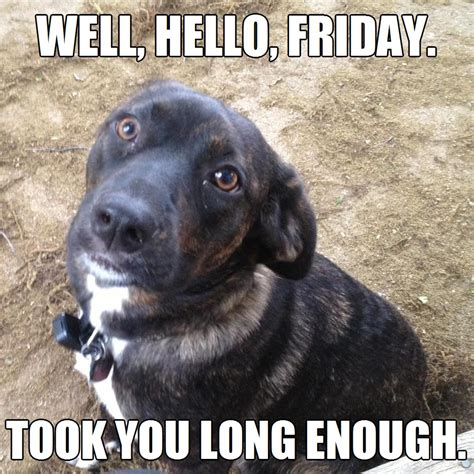 Friday Meme Pictures - finally friday took you long enough meme dog cute