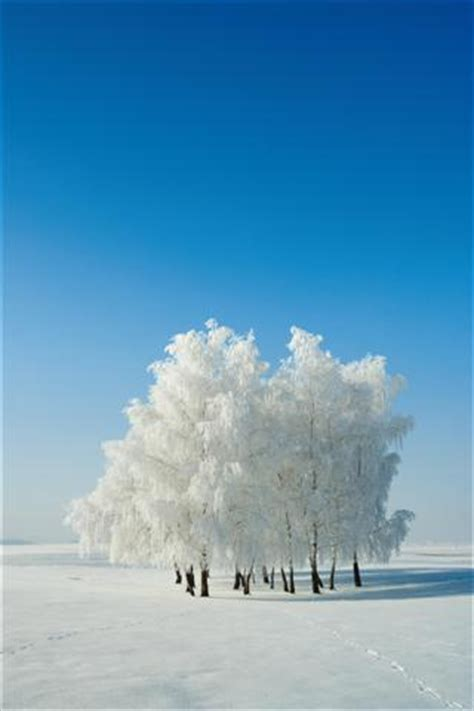 winter phone wallpapers gallery