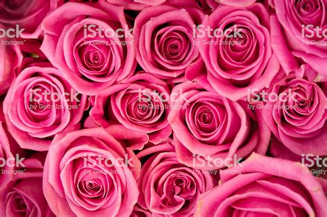 flowers image flowers stock photo more pictures of bouquet istock