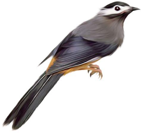 imagenes de aves sin fondo birds png images free download birds png