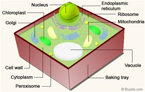 cabinets to go bolingbrook 3d plant cell diagram 28 images simple steps on how