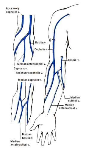 vein pattern meaning upper extremity veins diagram capillaries veins and
