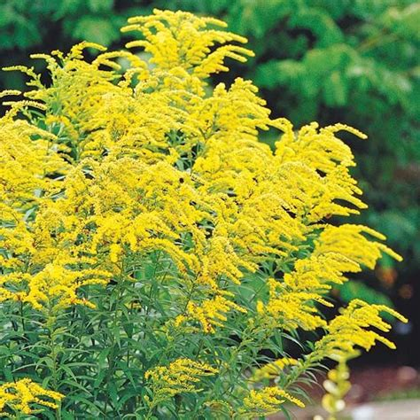 anna s perennials fall flowering perennials 173 best tuinieren herfstplanten images on pinterest