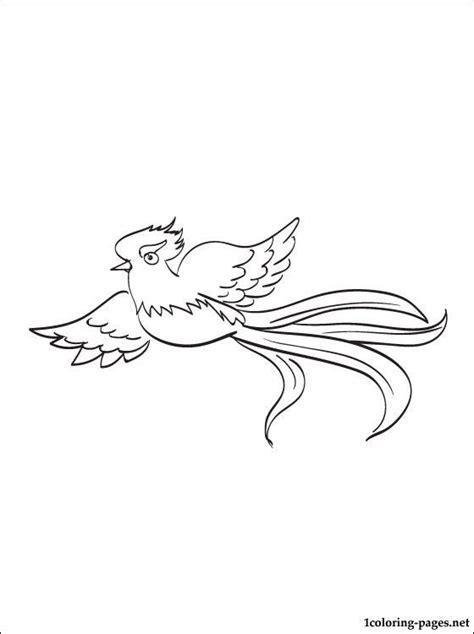 quetzal coloring page  print  coloring pages deer