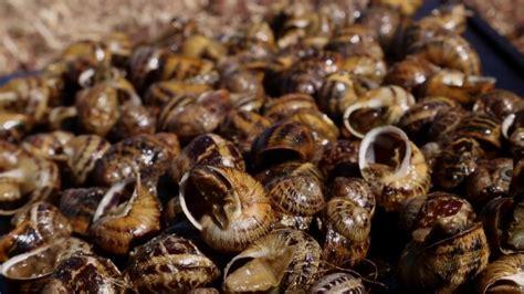 gerard depardieu recipes bon appetit gerard depardieu s europe s1 ep6 catalonia