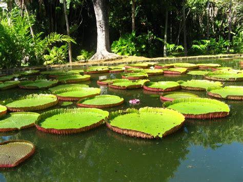 Mauritius Botanical Garden 3 Attractions In Mauritius Impressive Magazine