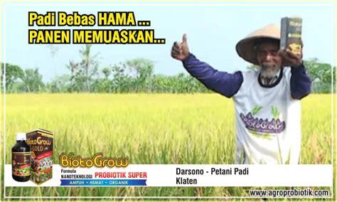Pupuk Cair Hayati Biotogrow padi bebas hama panen memuaskan biotogrow pupuk tanaman padi