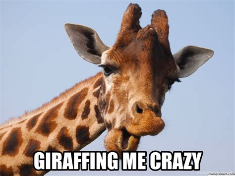 Funny Giraffe Memes - giraffe baby bedding memes