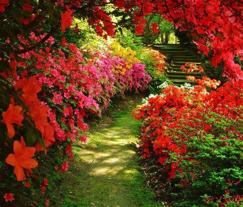 beutiful garden beautiful garden azalea beutiful flowers garden nature red 1290