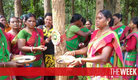 Cq Feature Reclaiming Real Health And A Womans Right To by How Saved A Forest From Timber Mafia