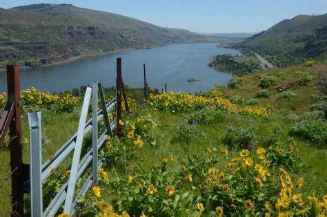 beautiful wildflower hikes  portland  spring