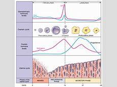 Dr. McCulloch's Integrative Medicine Blog   An Integrative ... Female Period Cycle