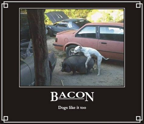 Dog Bacon Meme - dog bacon meme www imgkid com the image kid has it