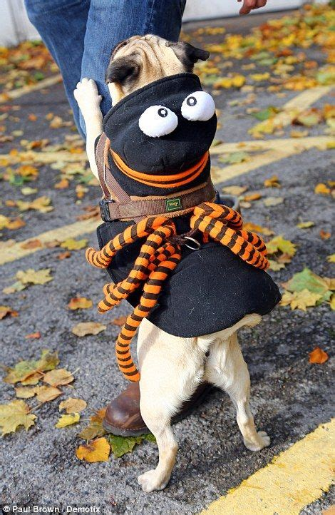 spider pug costume the world s catalog of ideas