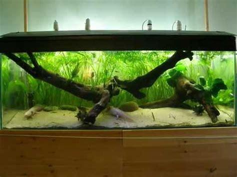axolotl planted bogwood tank youtube