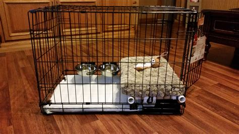 crate training a puppy with another dog in the house dog potty training funny images gallery