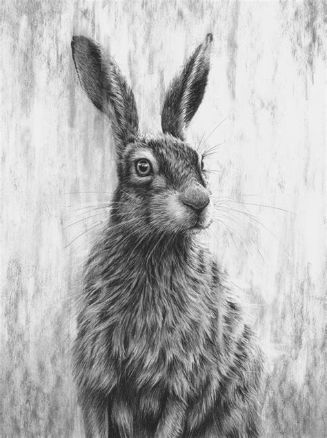 Brown Hare III — Nolon Stacey