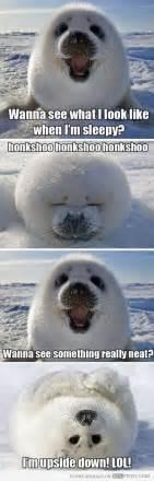 Harp Meme - best 20 harp seal ideas on pinterest baby seal baby