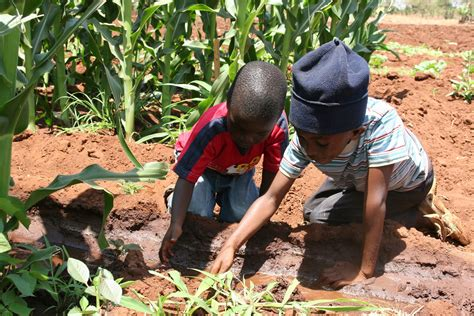 cotn success story child grows up to help run chitipi